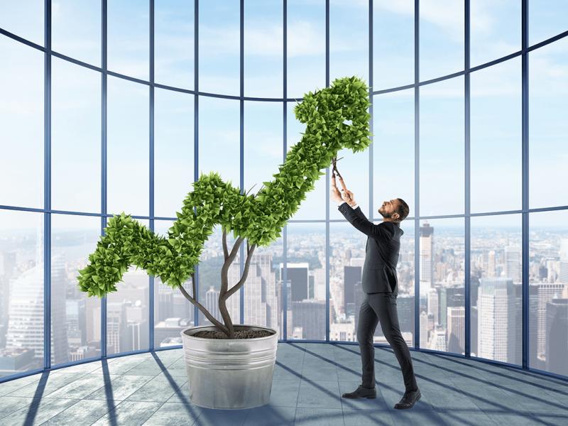 5 groeifasen bedrijfscoaching
